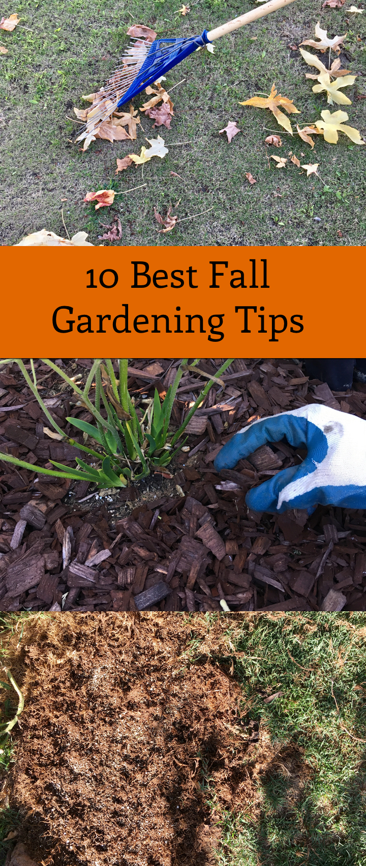 10 Best Fall Gardening Tips You Can Do This Fall