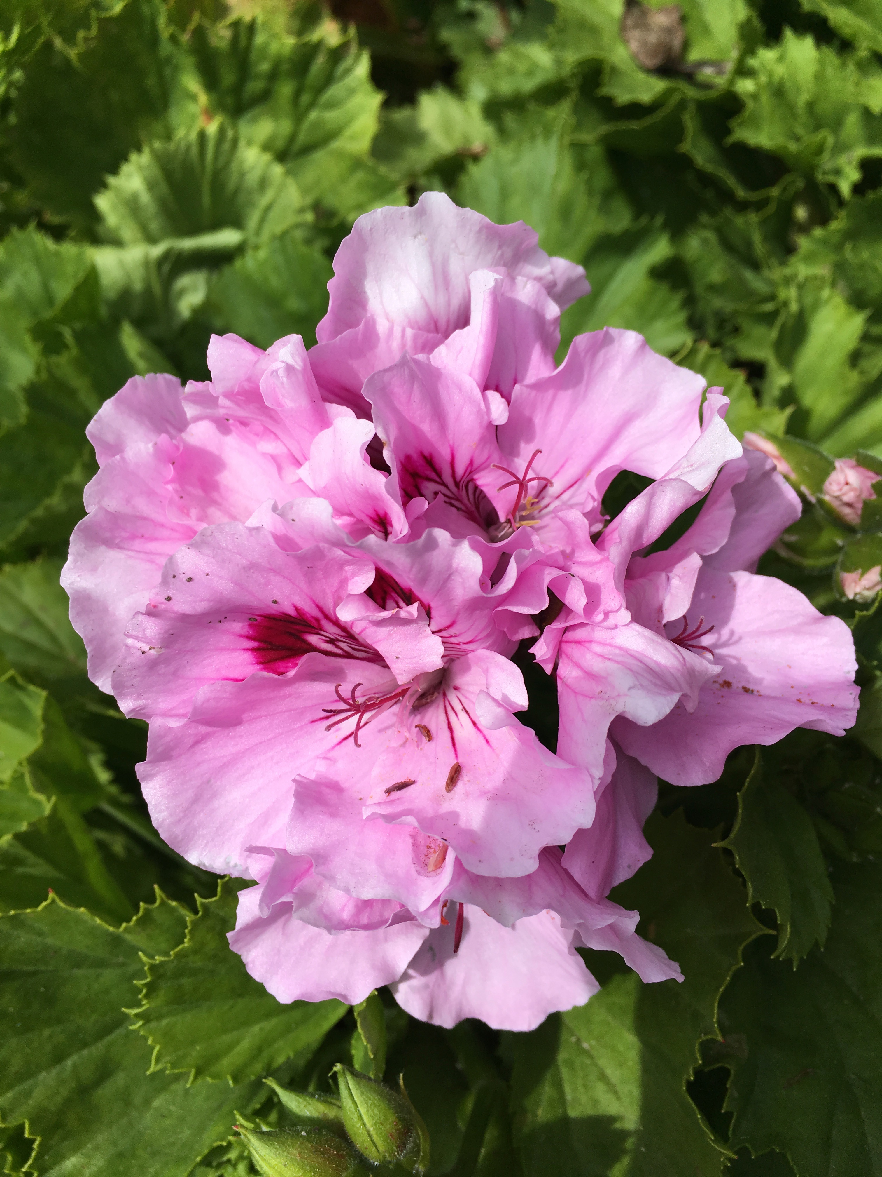 12 Low Maintenance Plants To Grow In Your Garden Just Savor It